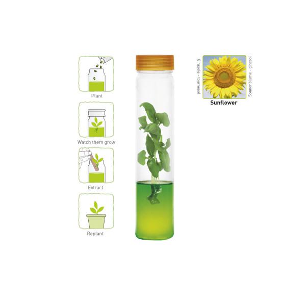 Plantarium Sonnenblume