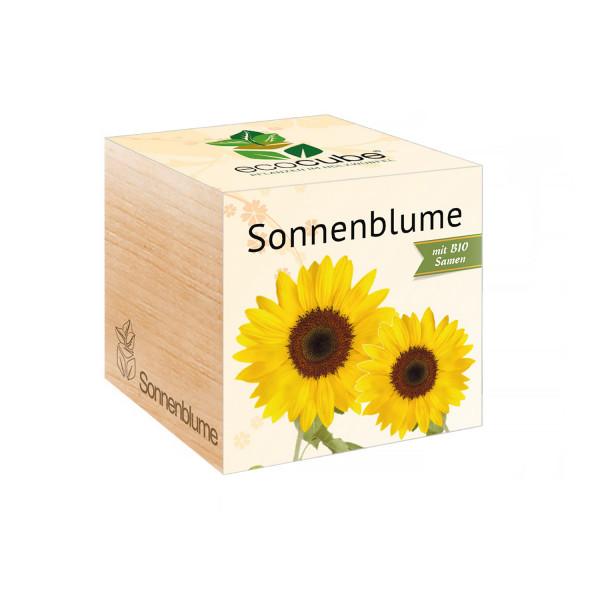 Ecocube - Sonnenblume